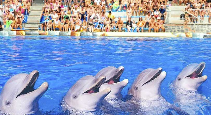 Delfinshow Aqualand Costa Adeje Tenerife