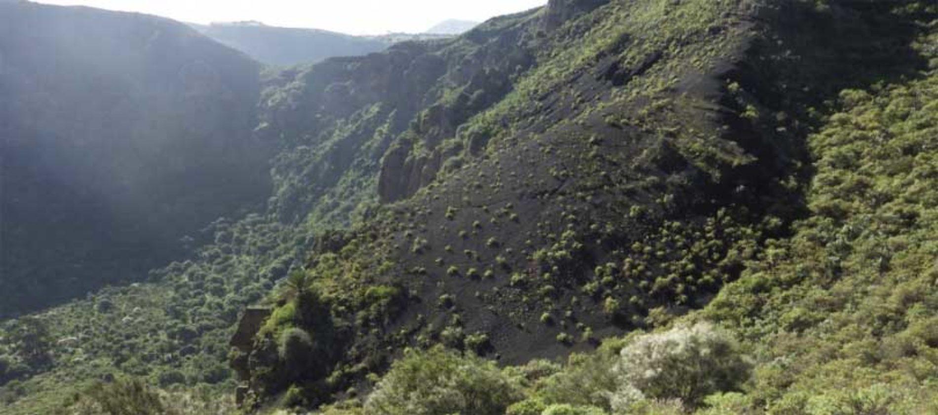 Toppene på Gran Canaria er farget grønn!
