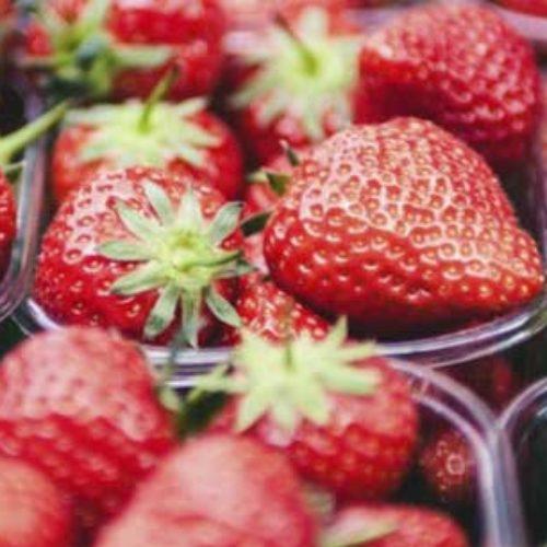 Velsmakende jordbærsuksess i Valsequillo