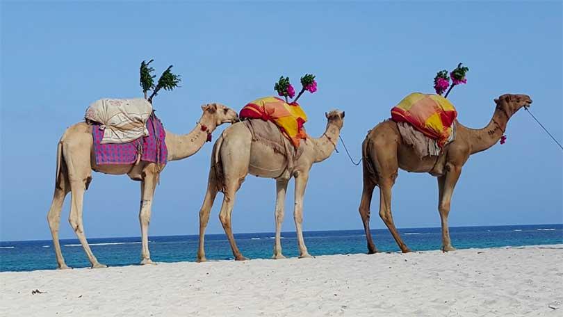 Kamel Gran Canaria Maspalomas