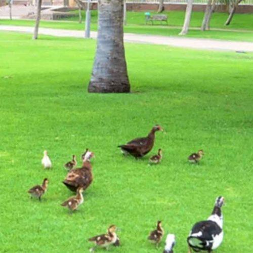 Parque Sur i Maspalomas midlertidig stengt