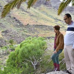 Rydding og skogplanting i Mogán