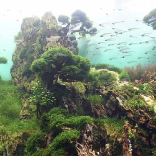 Loro Parque har laget fantastisk undervannshage!