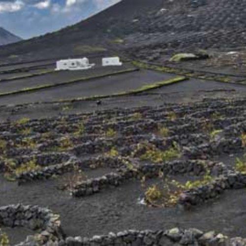 Vin: 2017-årgangen fra Lanzarote med toppscore
